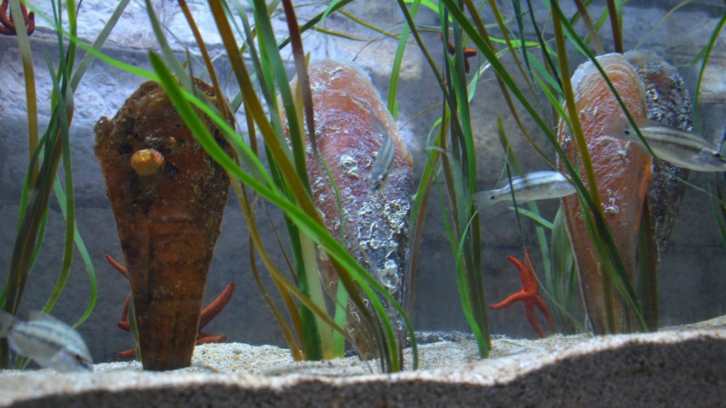 Veliki doprinos kompanije Gebrüder Weiss očuvanju ugrožene morske školjke – plemenite periske